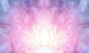 蓮と光のイメージ画像
