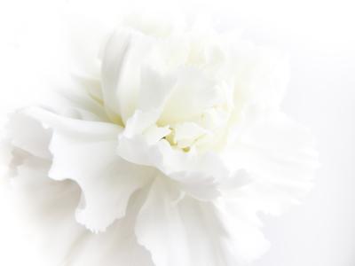 白花ぼかし入り画像