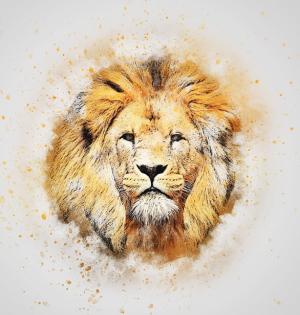 ライオンイメージ画